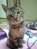 猫のポン太写真