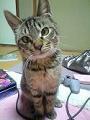 猫のポン太の写真