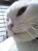 よその猫の写真