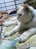 実家のボス猫の写真